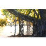 Old Banyan Tree Painted by Artist Win Min Mg