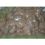 Pkm1 Moringa Seed Suppliers India